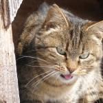 Mačka na preži